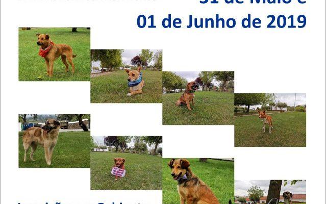 CampanhadeAdoo_F_0_1591378387.